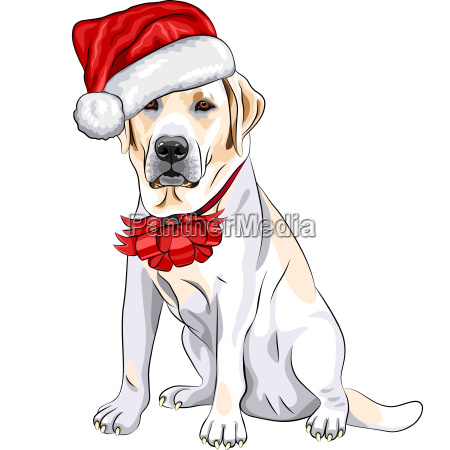 vector dog labrador in the hat