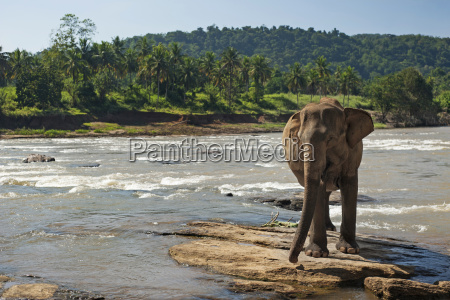 elephant - 13457528