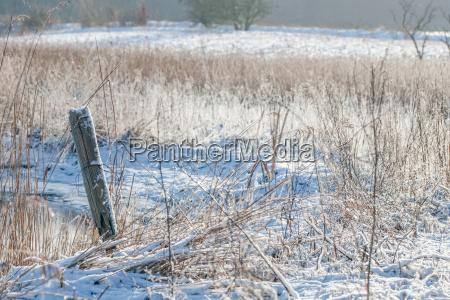 belo agradavel ambiente arvore inverno frio