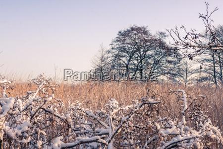 hermoso bueno medio ambiente arbol invierno