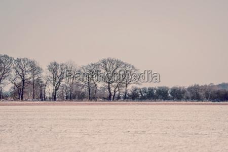 winter landcape in violet tone