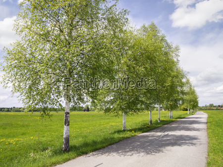 birch, avenue - 13465772