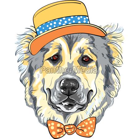 vector dog caucasian shepherd dog breed