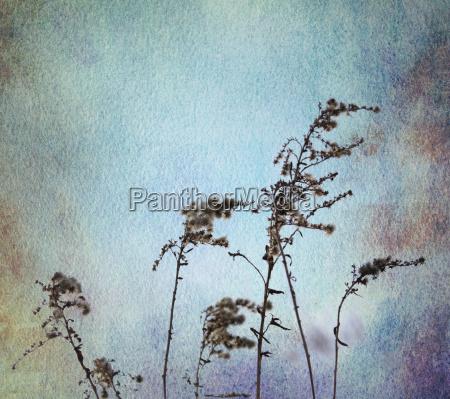 grasses watercolor blue ocher sepia