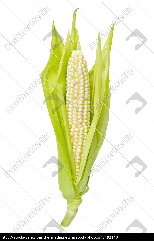 corncob - 13492140