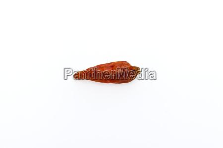 chili pepper against white background