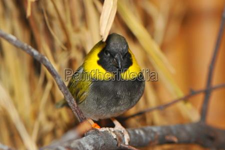 exotic little bird
