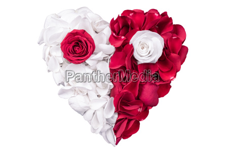 heart rose petals white red