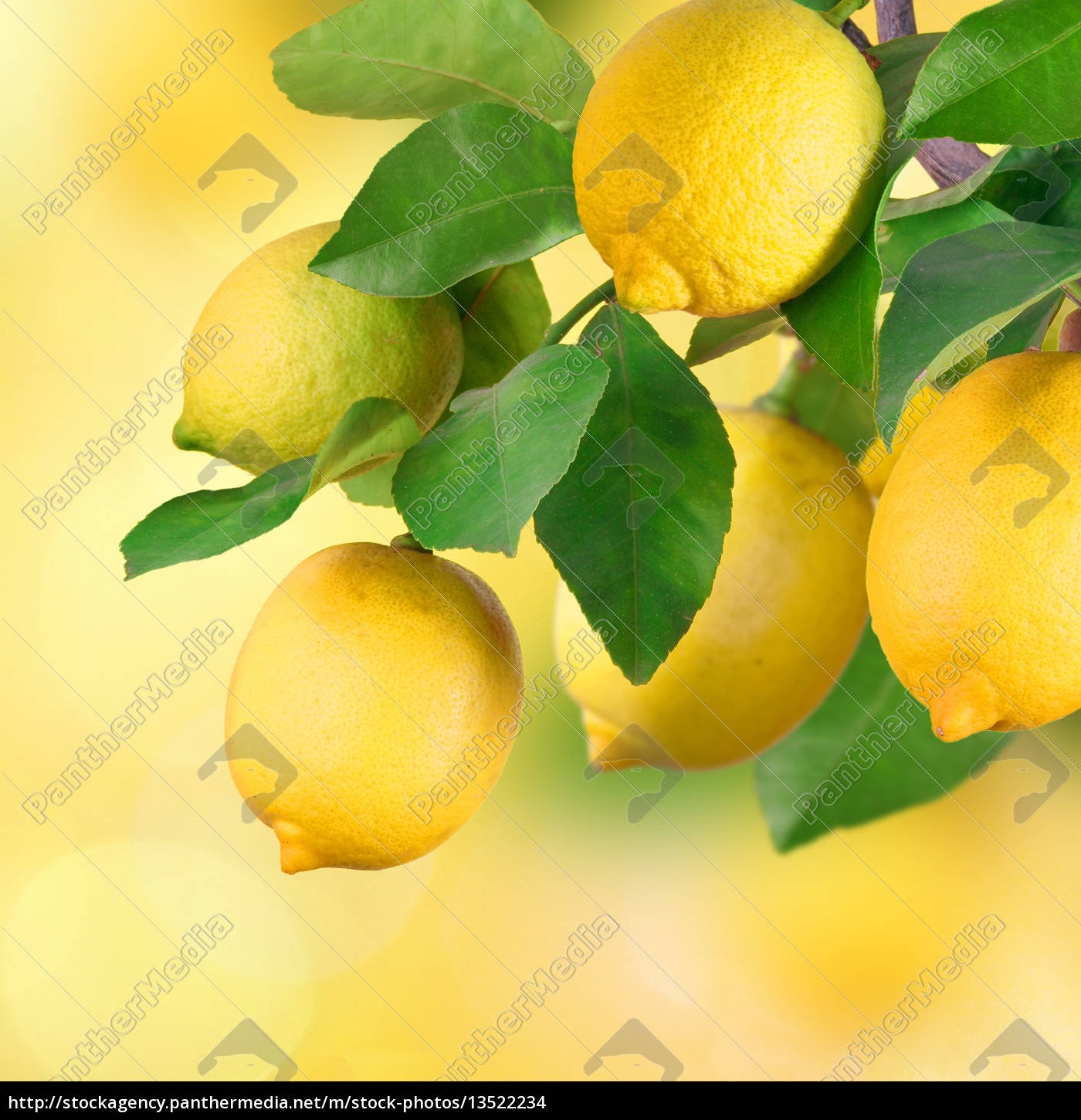 branches, with, lemon, space, for, text - 13522234