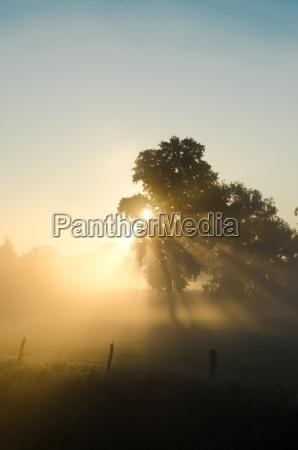 sunrise in autumnal fog