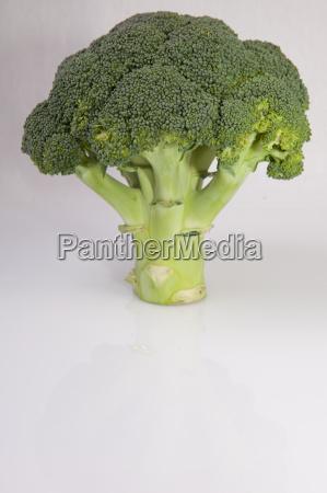 whole broccoli plant