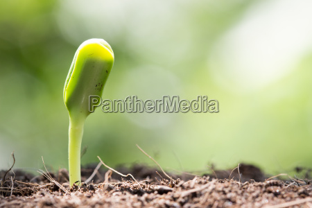 seed on soil and sunlight in