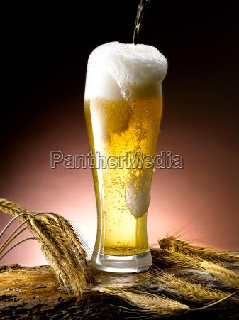 mug, of, beer - 13555642