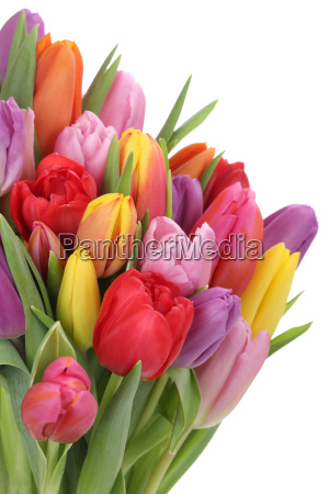 bouquet with tulips in spring or