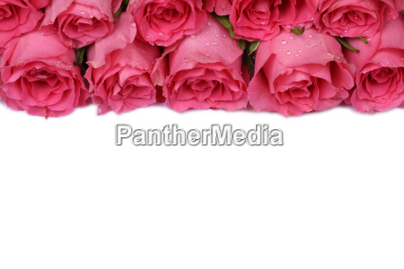 roses for valentines day or mothers