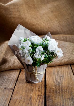 bellflowers in paper packaging