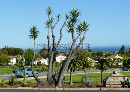palm tree in santa barbara