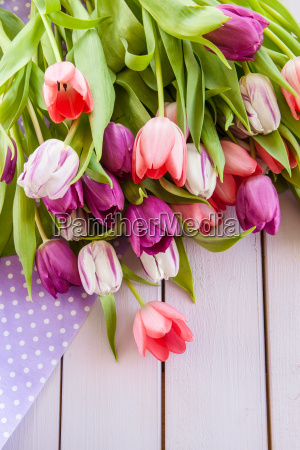 colorful tulips on purple