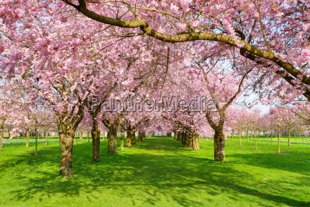 paradiesischer park in spring