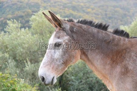 donkey grass sky paddock mammal spain