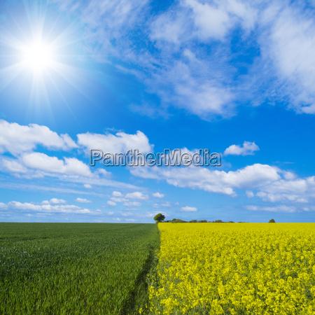 landscape, with, rape, field - 13690018