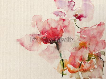 arte opzionale fiore pianta rosa fiori