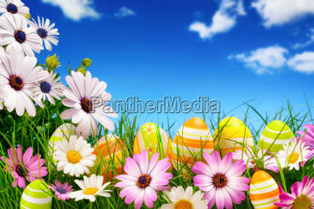 easter eggs and flowers against a