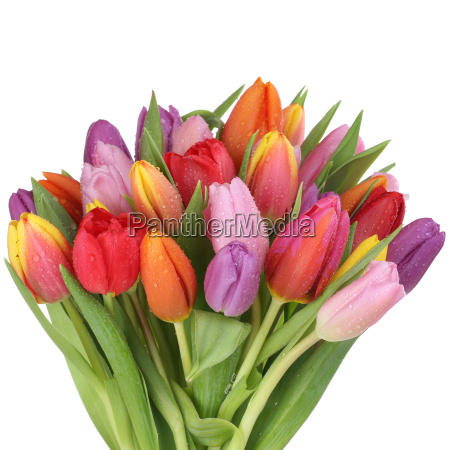 bouquet with tulips flowers in spring
