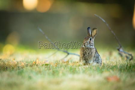 cute, rabbit, in, grass - 13737161