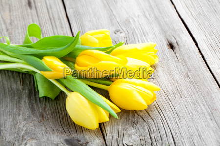 yellow tulips on wooden boards