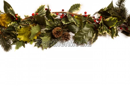 holly and green christmas branches