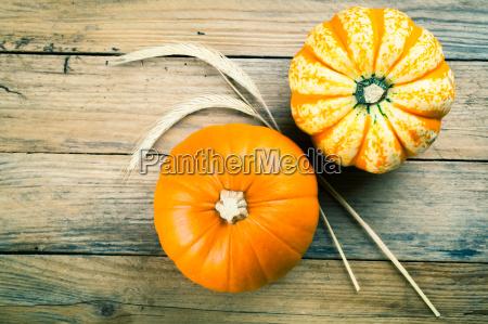 autumn pumpkins arranged on wooden board