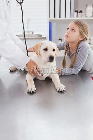 vet examining a dog with stethoscope
