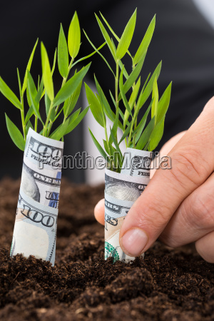 businessman, holding, saplings, covered, with, american - 13805885