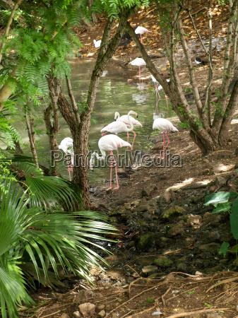 flamingos at a pond
