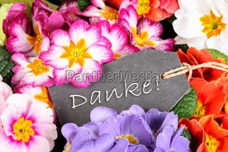 primroses as a thank you