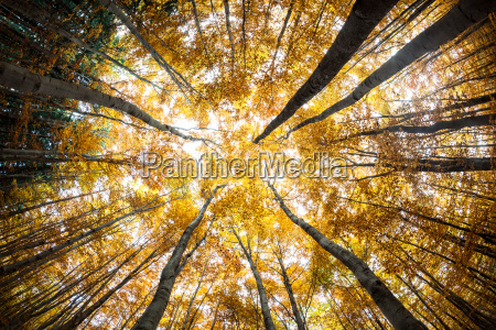 autumn forest treetops intentionally distorted image