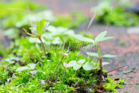 green moss and small tree at