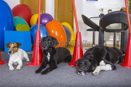dogs patients