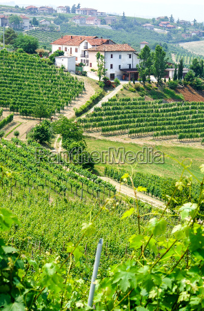 vineyards and wineries in piedmont