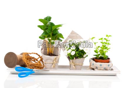 young plants in paper packaging are