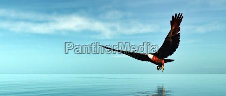 eagle flying 3d render