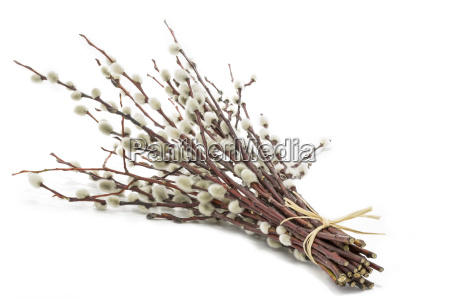 a bunch of catkins on a