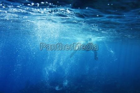 underwater view of a swimmer enjoying