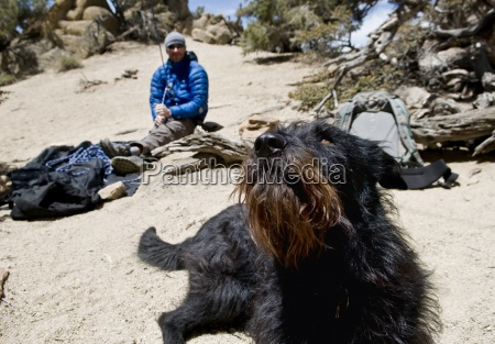 a black dog watches his owner