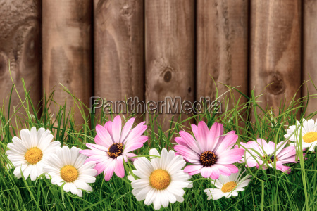 flowers in the grass in front