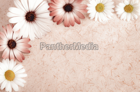 natural paper background framed with flowers