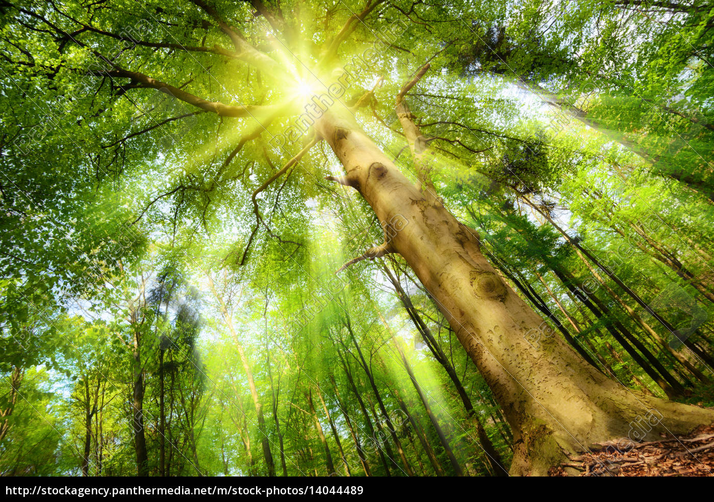 sun, in, the, magic, forest - 14044489