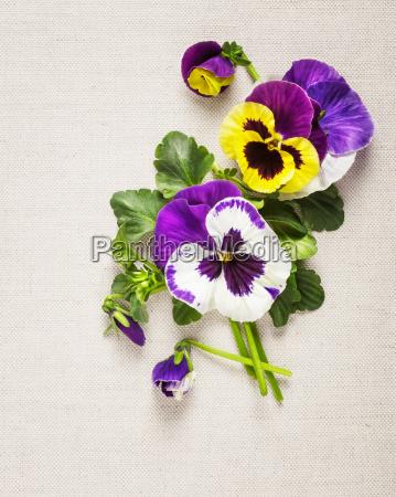 pansies, greeting, card - 14045659