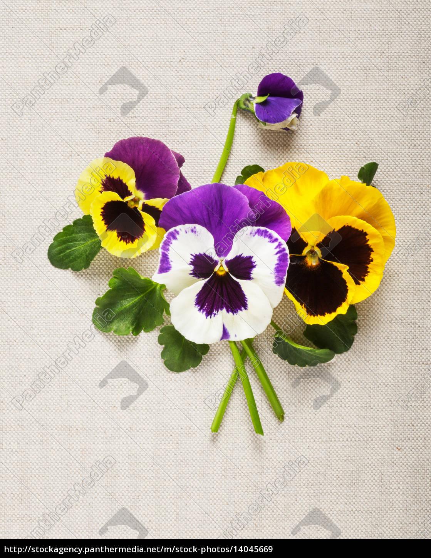 pansies, greeting, card - 14045669